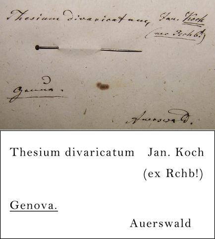 Awerswald Transcription