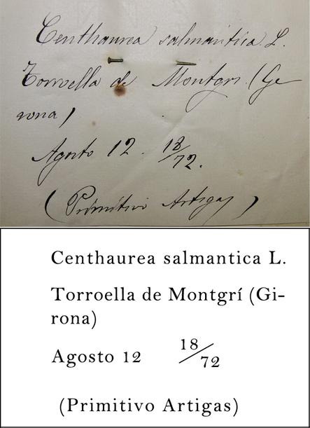 Artigas Transcription