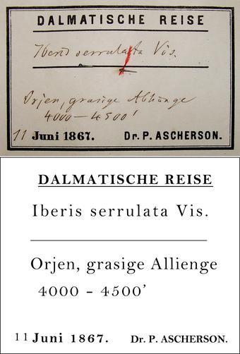Ascherson Transcription