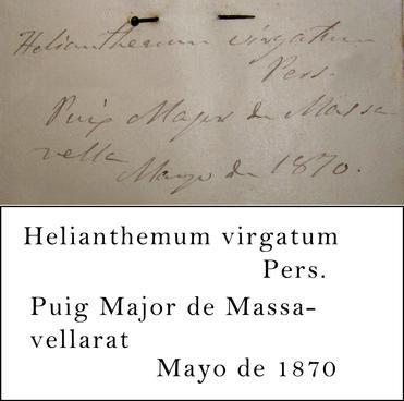 Barceló Transcription