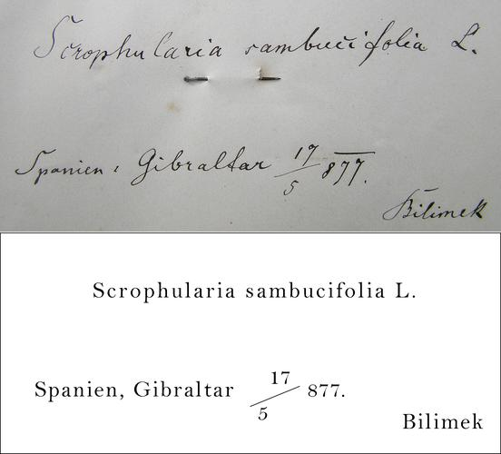 Bilimek Transcription