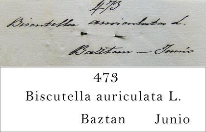 Cutanda Transcription