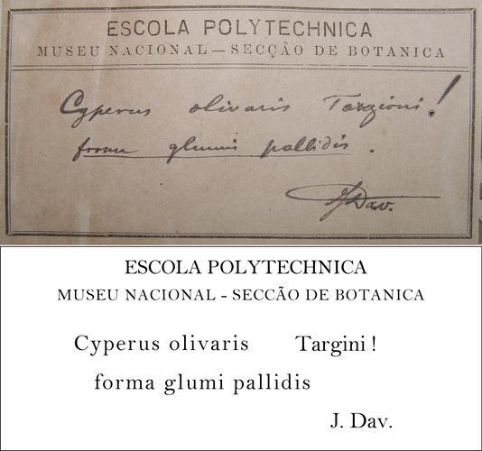 Daveau Transcription