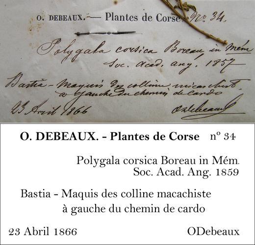 Debeaux Transcription