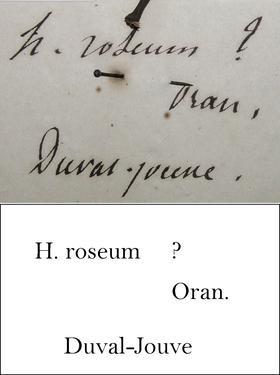 Duval Transcription