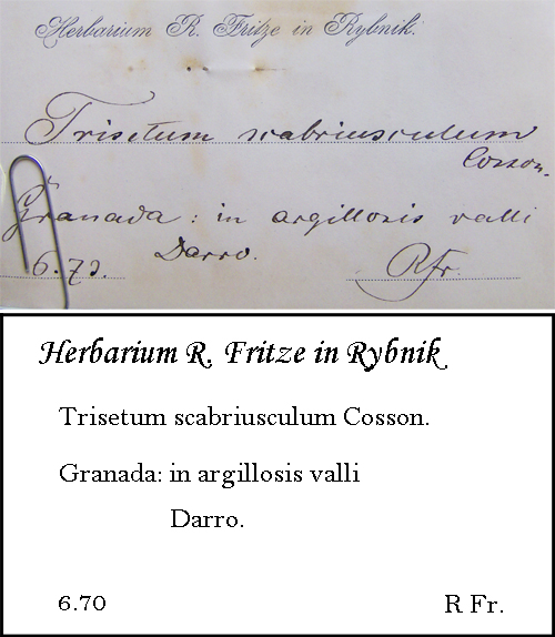 Fritze Transcription