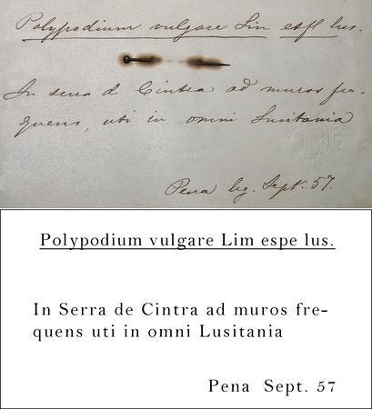 Gomes Transcription