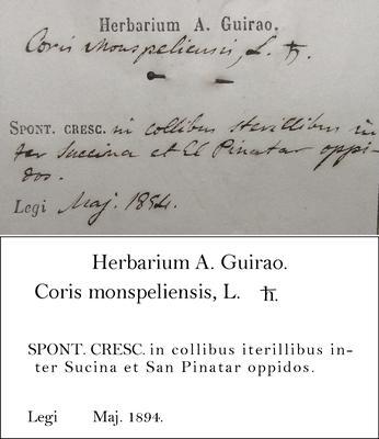 Guirão Transcription