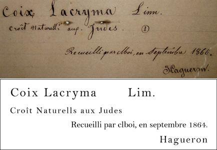 Hagueron Transcription