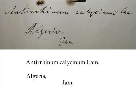 Jamin Transcription