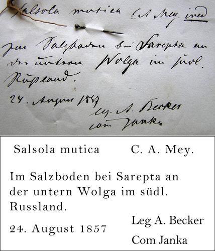 Janka Transcription