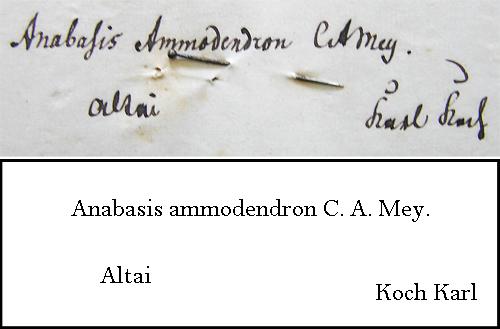 Koch Transcription