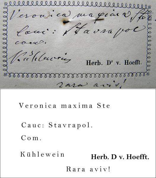 Kuhlewein Transcription