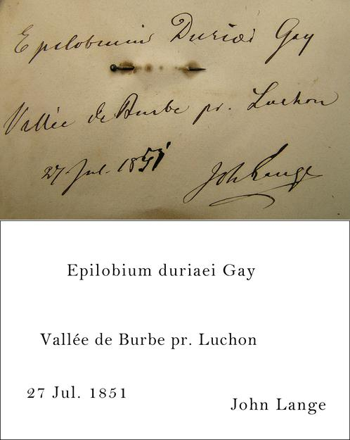 Lange Transcription