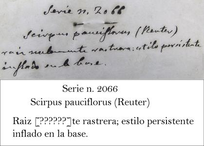Loscos Transcription
