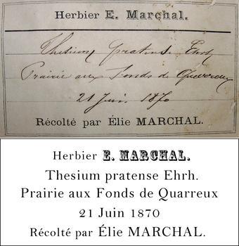 Marchal Transcription