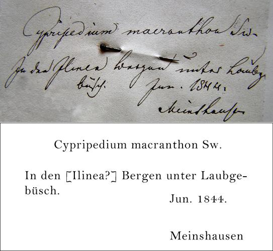 Meinshausen Transcription