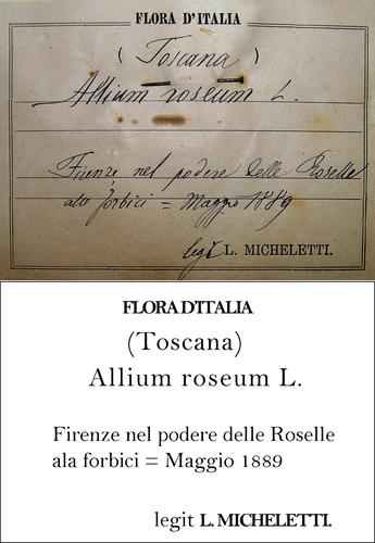 Micheletti Transcription