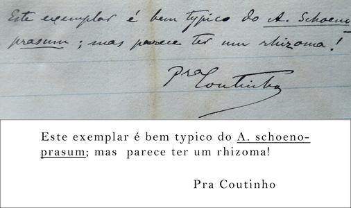 Pereira Coutinho Transcription