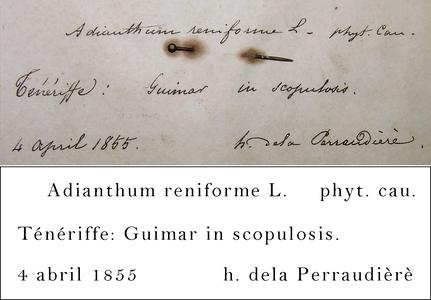 Perraudière Transcription