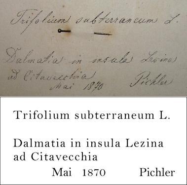 Pichler Transcription