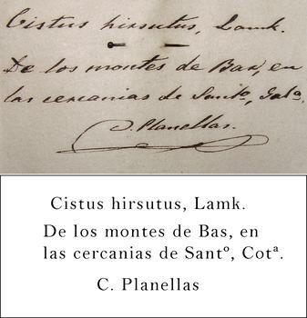 Planellas Transcription