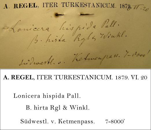 Regel Transcription