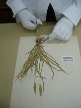 Removing the specimen 4
