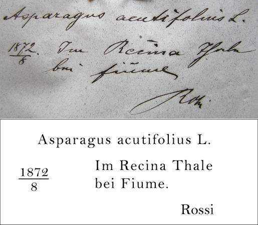 Rossi Transcription