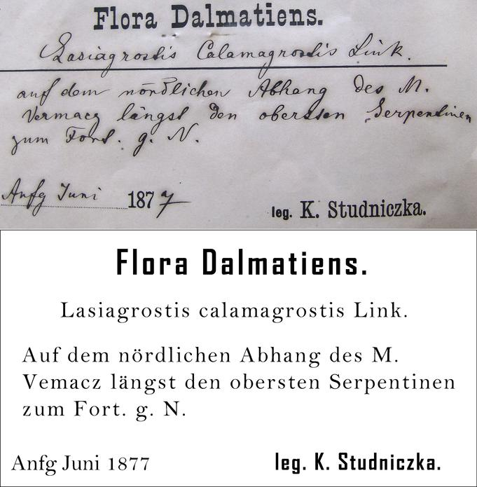 Studniczka Transcription