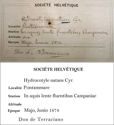 Terraciano Transcription