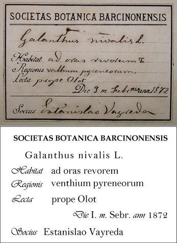 Vayreda Transcription