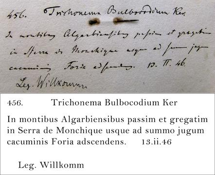 Willkomm Transcription