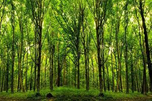 Cortam-se as árvores para não fazerem sombra aos arbustos_thumb