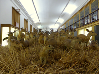 Galeria de Zoologia
