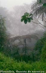 Pluvisilva